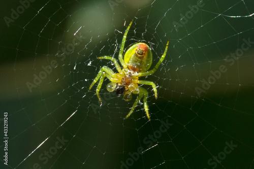 Cuadros en Lienzo araignée sur sa toile en gros plan