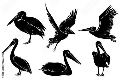Leinwand Poster Hand Drawn Silhouette Pelican