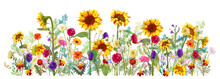 Horizontal Autumn's Border: Sunflowers, Aster, Thistles, Gerbera, Marigold, Daisy Flowers, Small Green Twigs On White Background. Digital Draw, Illustration In Watercolor Style, Panoramic View, Vector