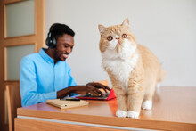 Male Entrepreneur Using Laptop While Cat Standing On Table At Home