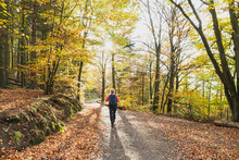 Woman Hiking Along Footpath In Autumn Beech Forest