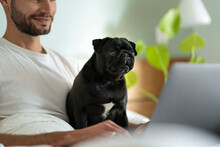 Young Man With Pug Dog Staring At Laptop While Sitting At Home