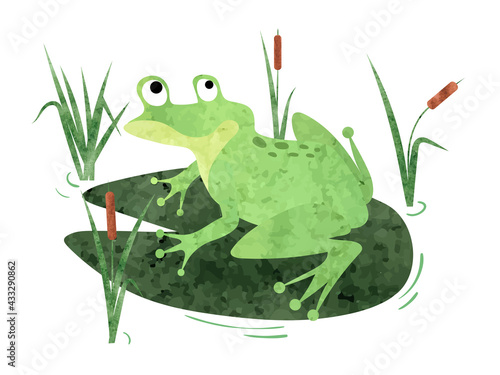 Cartoon Frog sitting on lily pad. Vector watercolor illustration. - fototapety na wymiar