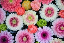日本の景色と花々/Japanese Landscape And Flowers.