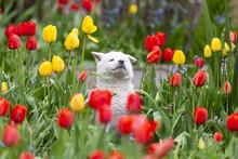 Kleines Hündchen Sitz Im Garten Unter Blumen