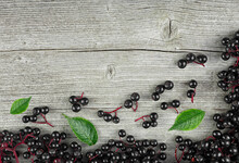 Fresh Elderberry On Branches With Green Leaves On A Wooden Background, Top View. European Black Elderberry.
