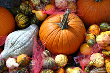 Autumn Pumpkins And Gourds Of All Colors, Stripes And Textures