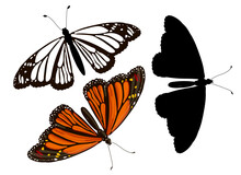 Set Of Three Monarch Butterflies - Orange In Cartoon Style, Black Silhouette And Doodle Style. Stock Vector Illustration Isolated On White Background.