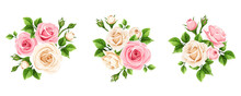 Vector Set Of Pink And White Rose Flowers Isolated On A White Background.