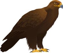 Vector Birds Of Prey Golden Eagle