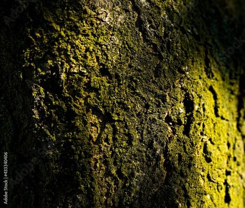Kora drzewa - fototapety na wymiar