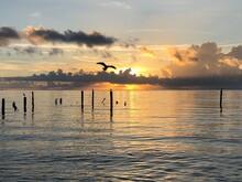 Landscapes- Beaches- Birds