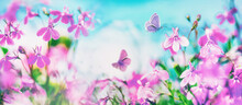 Butterflies Flutter Over Small Wild Purple Flowers In Nature Outdoors Against Blue Sky. Spring Summer Natural Scene With Soft Selective Focusing.