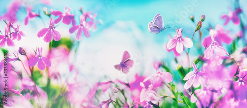 Butterflies flutter over small wild purple flowers in nature outdoors against blue sky. Spring summer natural scene with soft selective focusing. - fototapety na wymiar