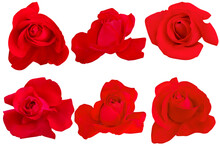 Red Rose On White Background. Concept For Valentine Day.Photo With Clipping Path.