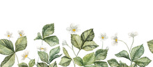 Long Seamless Banner With Watercolor Hand Painted Strawberry Leaves And Flowers