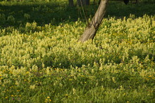 Field, Flower, Spring, Nature, Yellow, Meadow, Flowers, Grass, Green, Summer, Plant, Landscape, Agriculture, Sky, Dandelion, Blossom, Garden, Blue, Farm, Bloom, Tree, Canola, Oil, Rural, Forest
