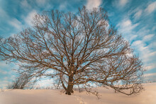 Bare Tree In The Winter Landscape With Blue Sky And Motley Clouds