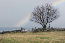 Old Stone Railing Alongside With The Big Tree And Rainbow Behind