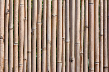 Close Up Bamboo Trees Panel Stick Fence Background