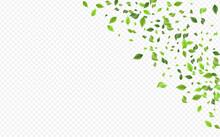 Mint Leaf Forest Vector Transparent Background