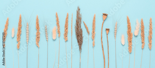 Fotografering Composition of autumn dry grass on a blue paper background, banner