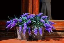 Fleurs Violettes Au Bord D'une Fenêtre, Olbia, Sardaigne, Italie, Europe
