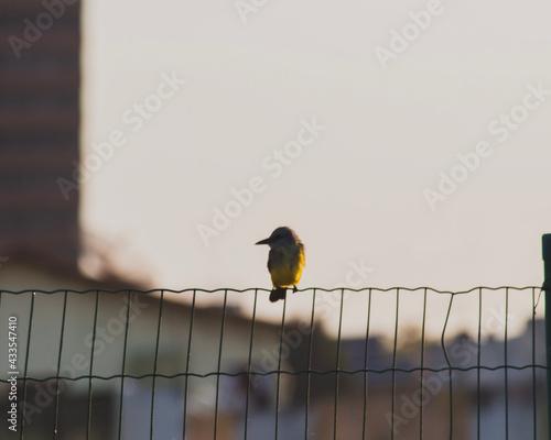 Obraz na plátně bird on a wire