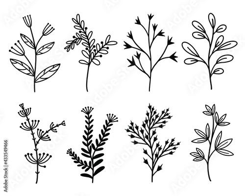 Fotografiet Vector set of botanical elements