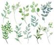 Leinwandbild Motiv Leaves watercolor set. Hand painting floral illustration. Green leaf, plants, foliage, branches isolated on white background.