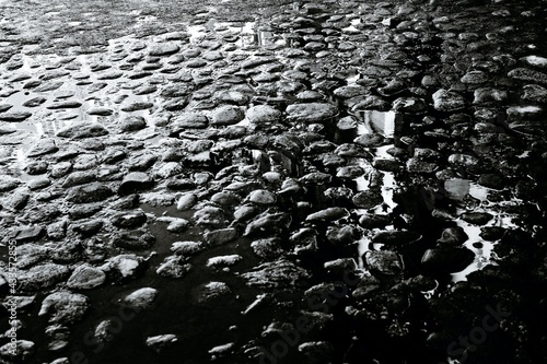 Fotografering stones protruding from silt on a shallow river bed, in black and white