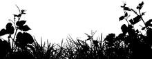 Silhouette D'herbes Et De Vignes