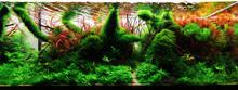 Aquascape, Aquascaping, Hardscape, Aquarium, Hardmade, Natureaquarium, Green, Nature, Plant