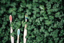 Colorful Eco Friendly Bamboo Toothbrushes On Green Clover Leaves Background, Dental Care With Zero Waste Concept, Sustainable Lifestyle