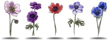 A Set Of Anemone Colors Of Different Colors Hand Draw, Isolated Objects For The Design Of Postcards, Invitations And Creating Patterns,imitation Of Watercolors