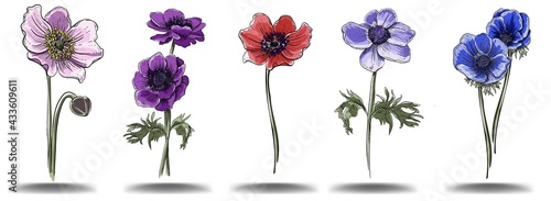 Fotografering A set of anemone colors of different colors hand draw, isolated objects for the