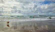 The Dog Is Running Along Sandy Beach