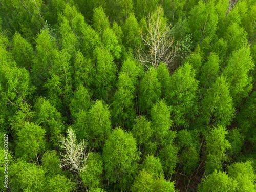 las w polsce - fototapety na wymiar