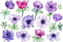 Set Watercolor Flowers, Colored Anemones On Isolated White Background, Floral Design Element