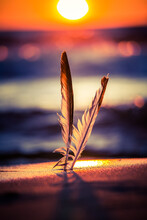 A Beautiful Seagull Feathers In The Sand On The Beach Of Baltic Sea. Vibrant Beach Scenery With Bird Feather In The Sunset.