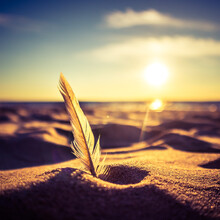 A Beautiful White Feather In The Beach At The Baltic Sea. Sunset Scenery With Birds Feather Ar The Sea Shore.