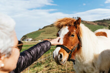 Crop Unrecognizable Elderly Female In Sunglasses Caressing Mare With Fluffy Mane In Countryside Field Under Cloudy Sky