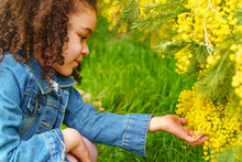 Side View Kid Touching Blossoming Shrub With Yellow Flowers Growing In Park In Daytime