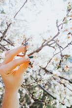Crop Anonymous Female Touching Blossoming White Flowers On Tree Branch In Garden On Sunny Day