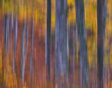 Abstract Background Of Trees With Golden Leaves Growing In Woods In Fall Season