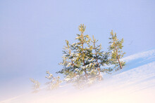 Amazing Scenery Of Tree In Snowy Hill At Daytime In Winter