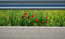 Wildflowers Emerging Between The Asphalt And The Guardrail Of A Road