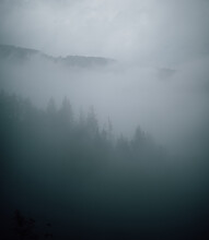 Scenic View Of Overgrown Trees In Misty Woods Under Gray Sky In Forest