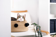 Adorable Cat With Attentive Gaze Looking Up While Lying In Basket In Light House Room