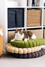 Adorable Cat With Brown And White Fur Lying On Pile Of Assorted Rugs While Looking Away In House